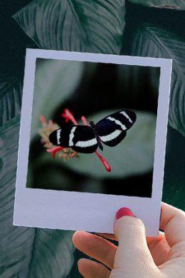 Polaroid Pop 2.0 example